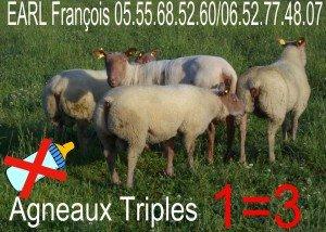 3+3-300x214 AGNELLES