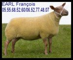 brebis-rouge-de-louest-jpg-150x123 Vendéen