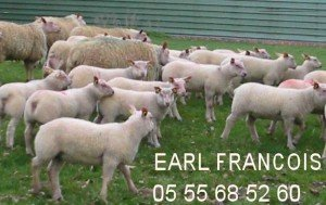 rofrancois-300x189