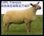 brebis-rouge-de-louest-jpg2-150x123 Corrèze