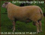 ROUGE DE L'OUEST BREBIS Béliers Agnelles reproducteurs Bélier rouge de l'ouest arr/arr rrr-150x118