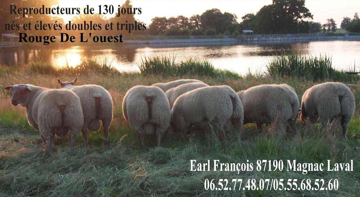 ROUGE DE L'OUEST ro20131