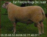 EARL François Rouge De L'ouest sélectionneur Bélier brebis agnelles rrr2-150x118